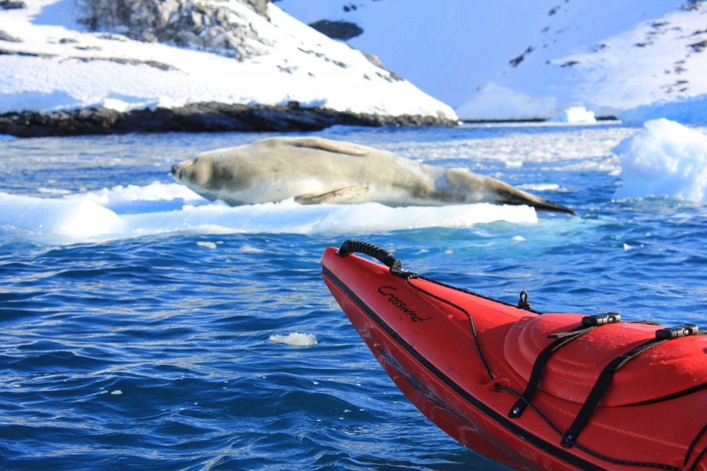 Kayaking offers a tranquil stealth that allows you to get closer to nature
