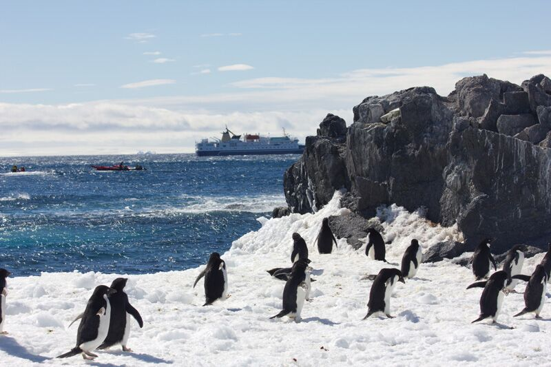An express trip, flying in to enjoy the riches of Antarctica's wildlife