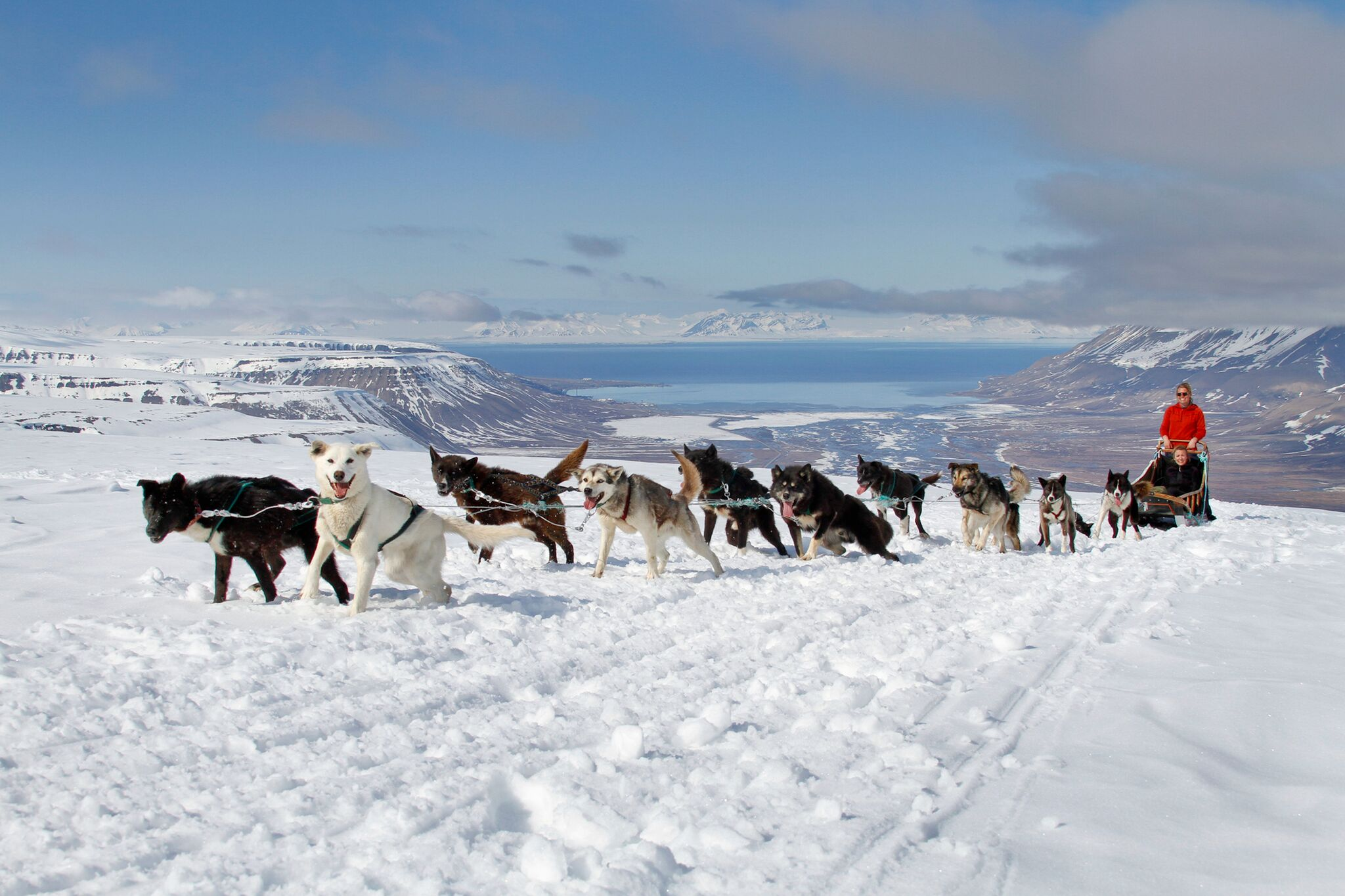 Dog Sledding in Svalbard/Spitsbergen Norway