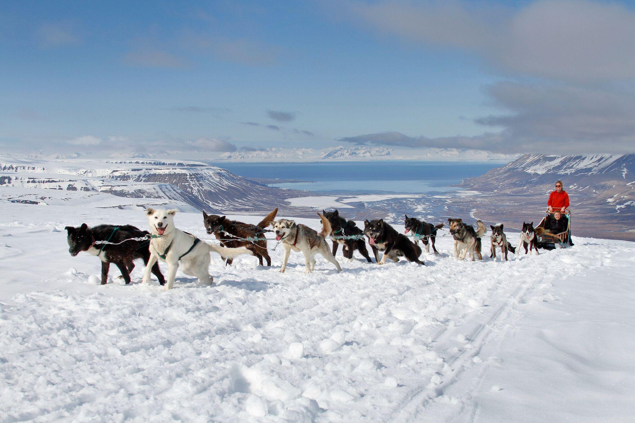 Dog Sledding in Svalbard/Spitsbergen Norway