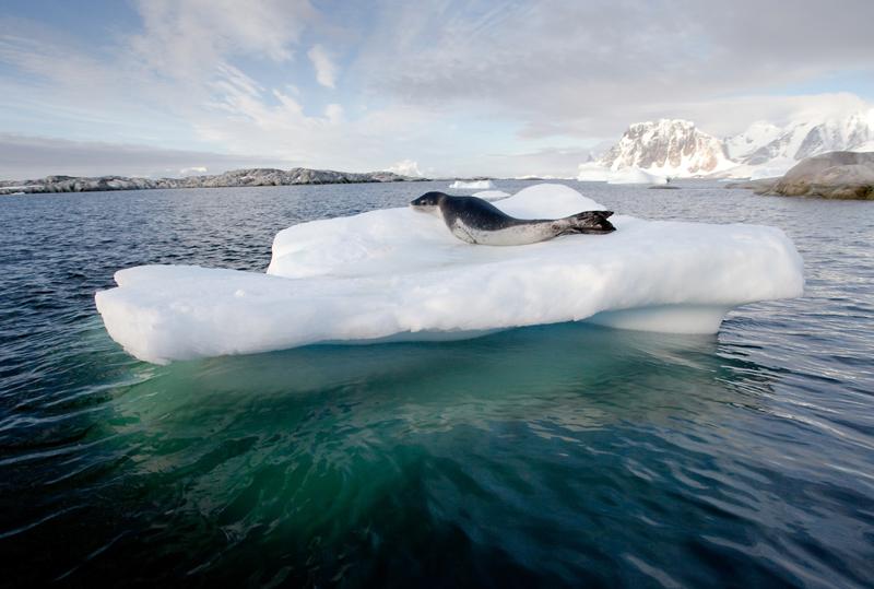 A seal on an iceberg in Antarctica