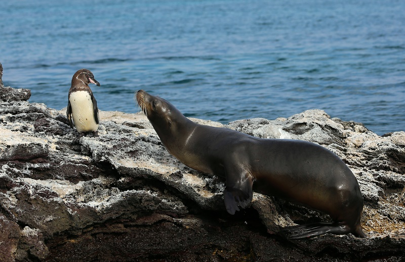 sealion-and-penguin