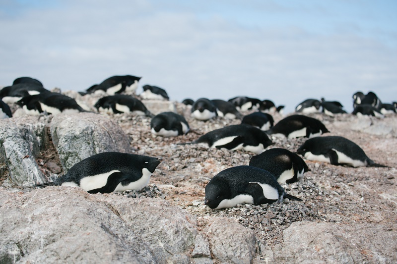 penguins resting on a rock in antarctica