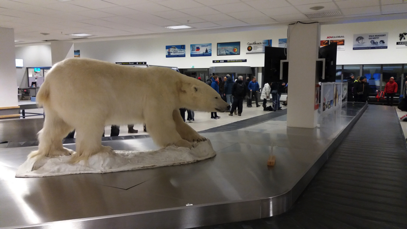 Day 1 Polar bear at Longyearbyen airport