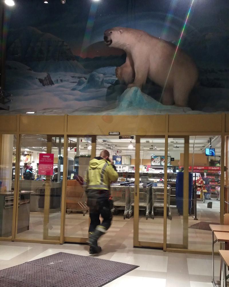 Day 3 supermarket polar bear