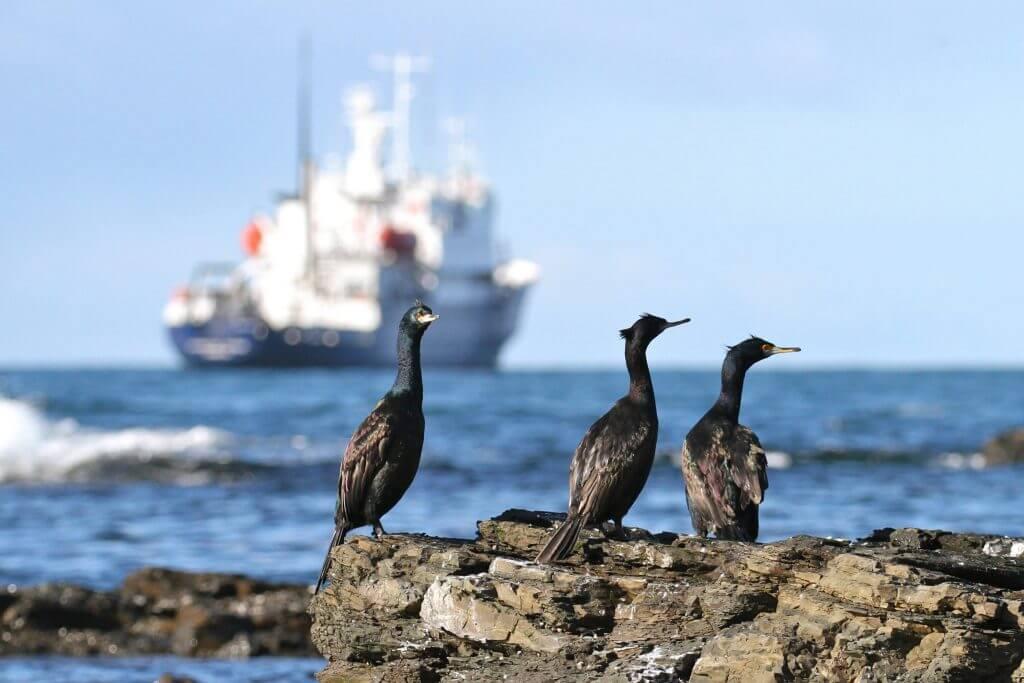 Polar Cruise Vessel The Spirit Of Enderby
