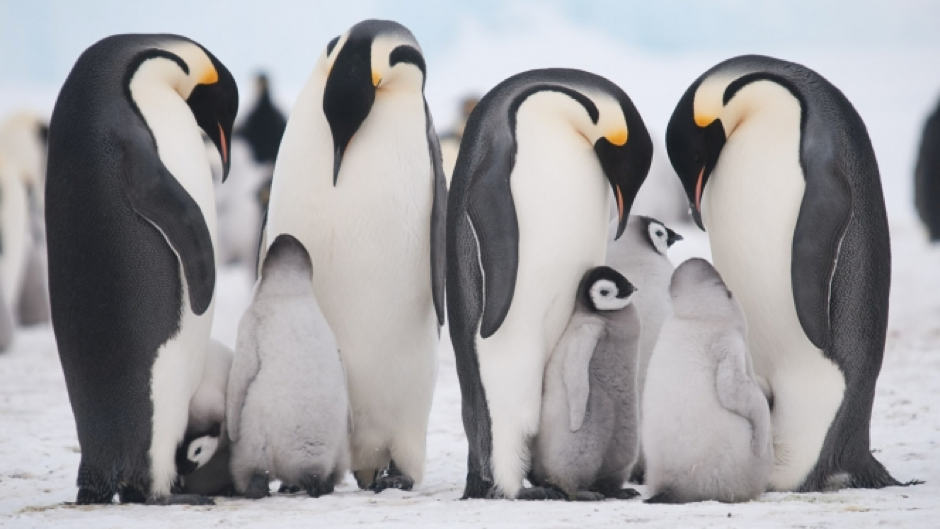 The four-thousand-stong emperor penguin colony