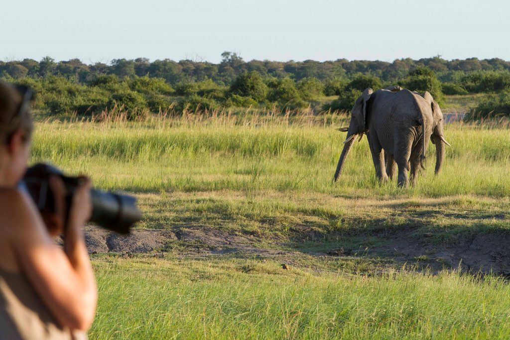 The green season offers a more intimate wildlife experience.
