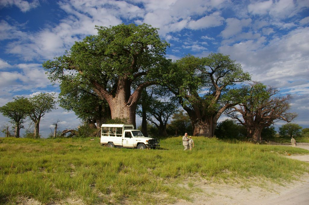 lush green forest in March in botswana's Green season