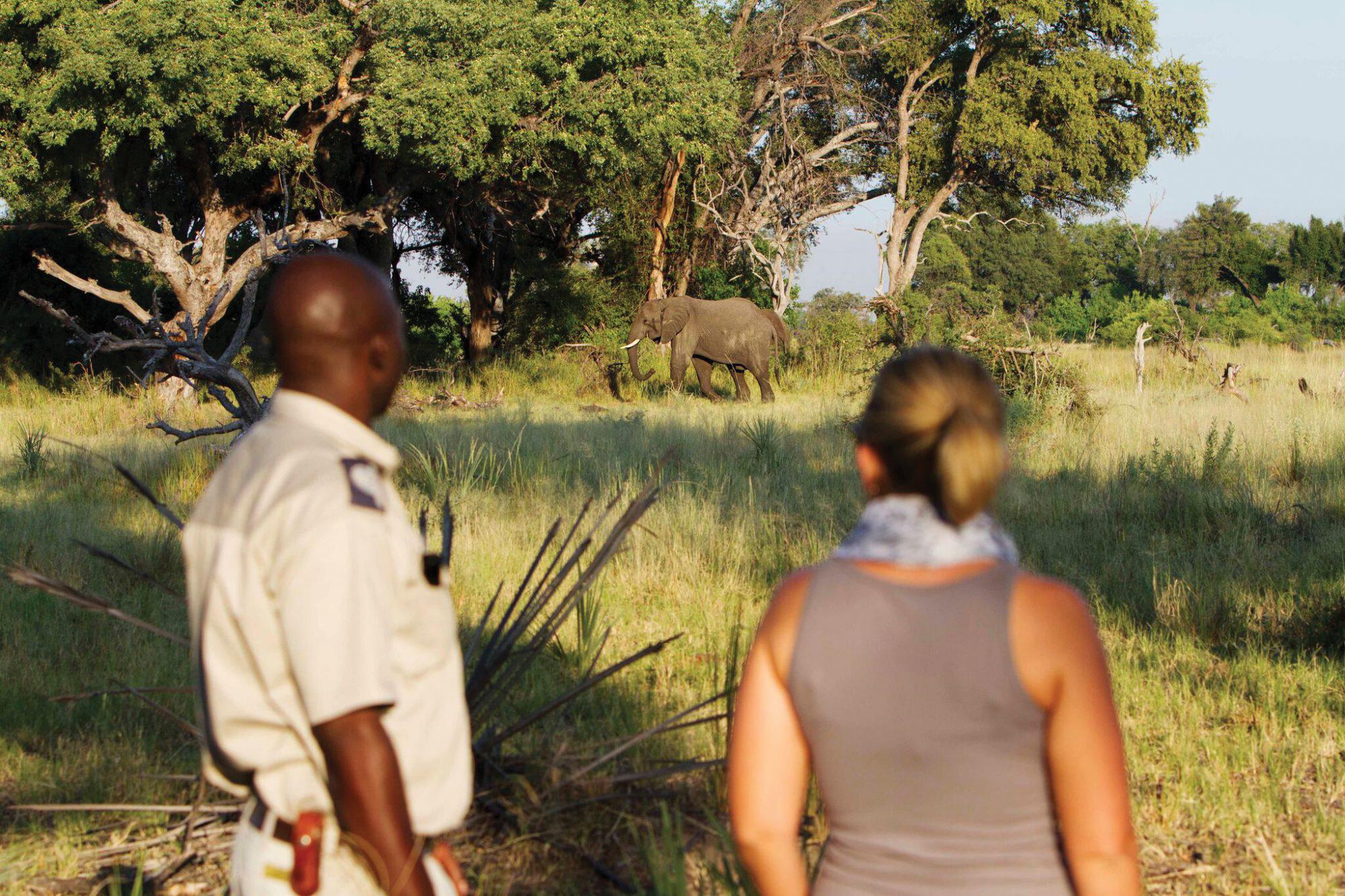 elephant runs between the trees on safari in botswana
