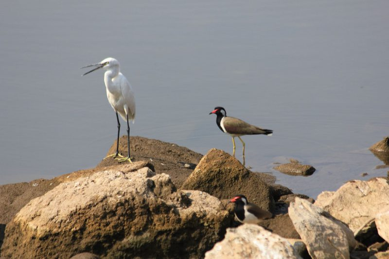 the birdlife in Gir National Park & Sanctuary is second to none.