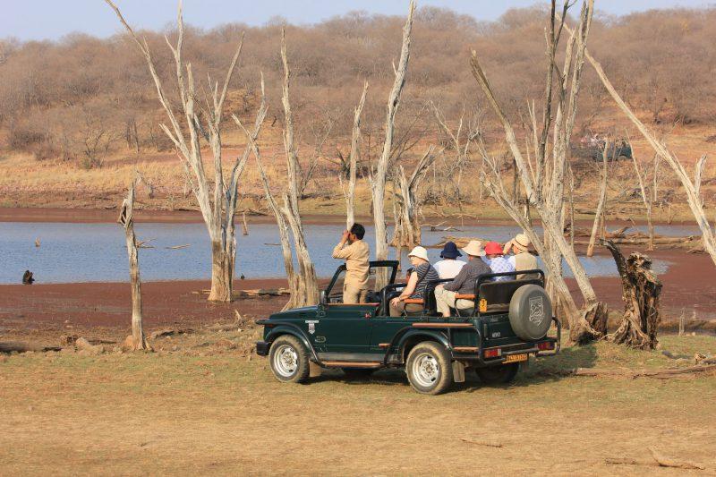 small jeep on wildlife safari in India