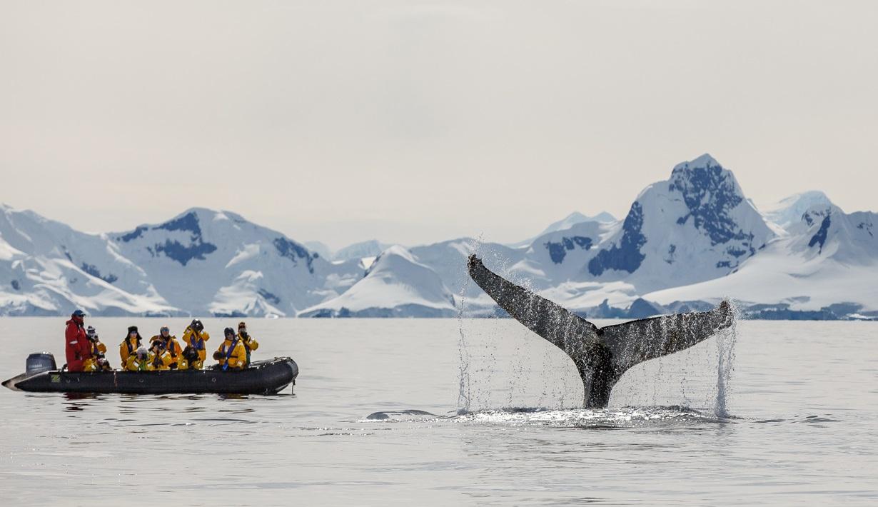 antarctic explorer drake passage