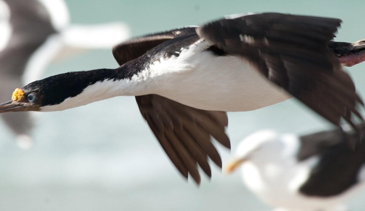 bird drake passage