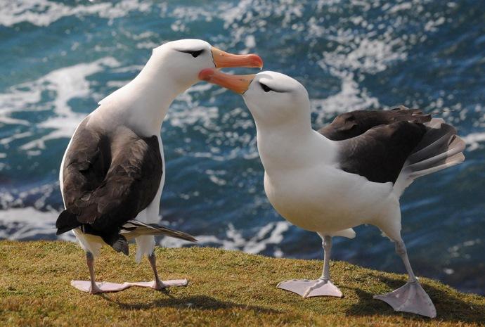 birds drake passage