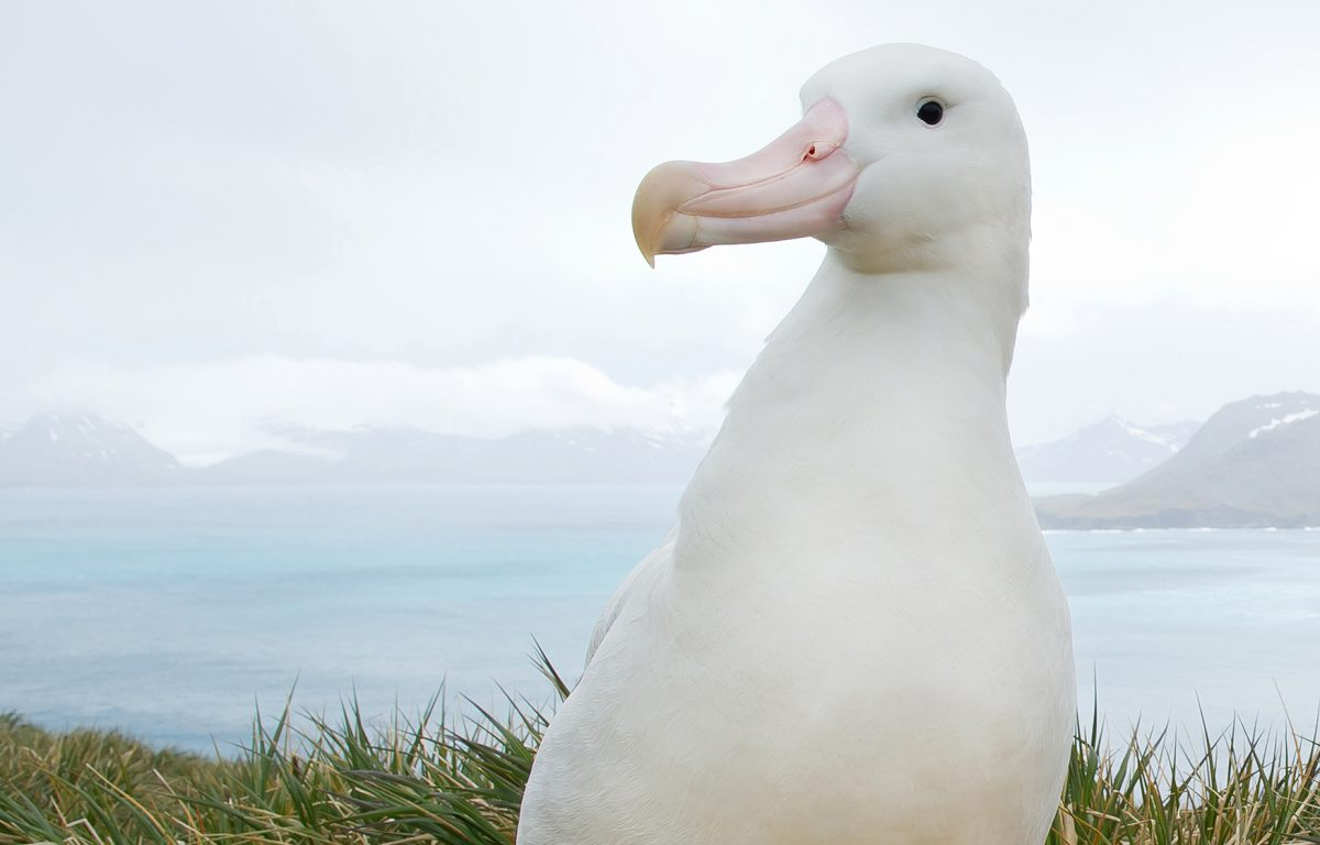 Every day, hundreds of albatross die in longline fisheries