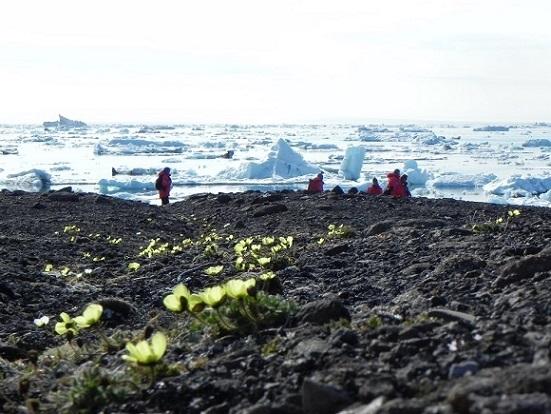 Flower ice sea