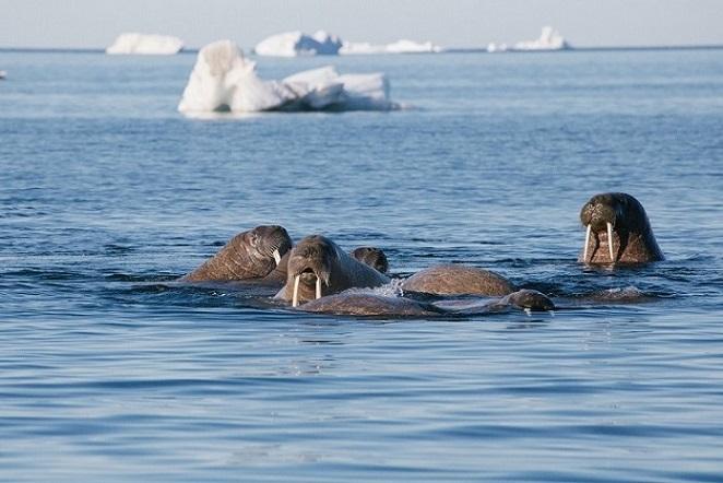 Sea Lion Iceberg