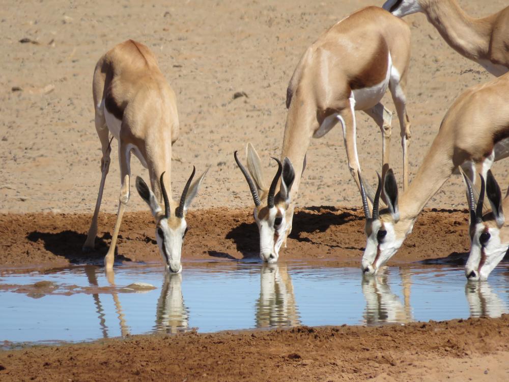 Wildlife in Etosha National Park