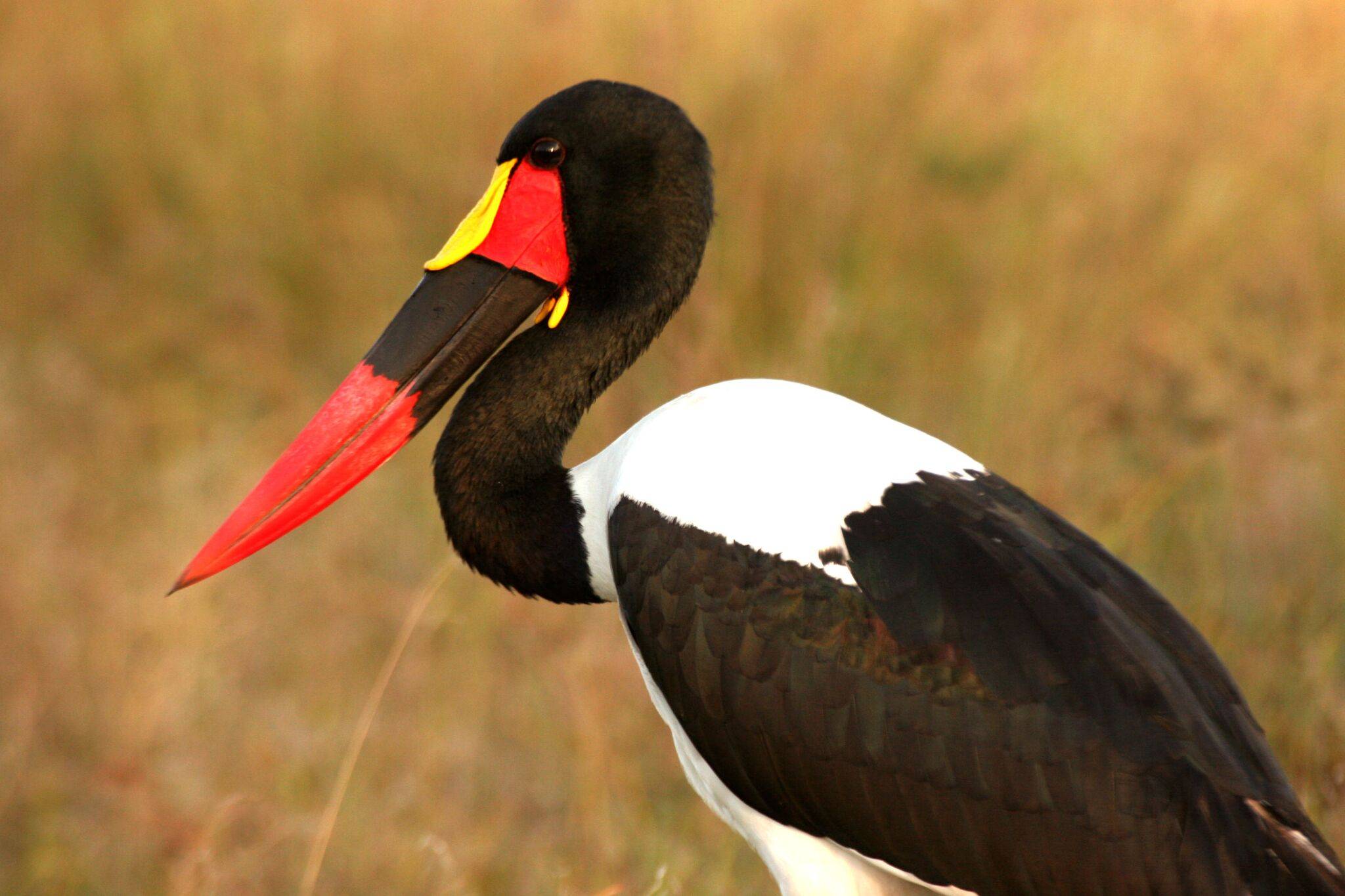 mobile safari as birdwatchers paradise