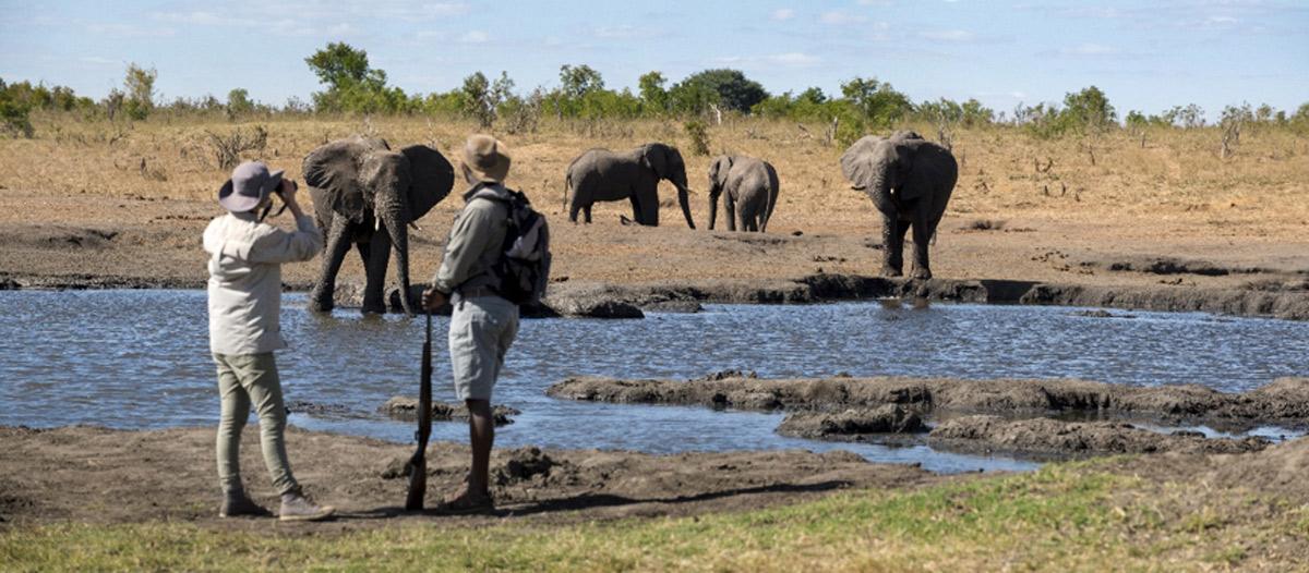 How Many Elephants