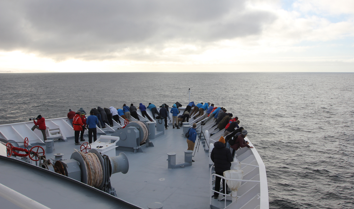 Whales Off The Bow In Antarctica