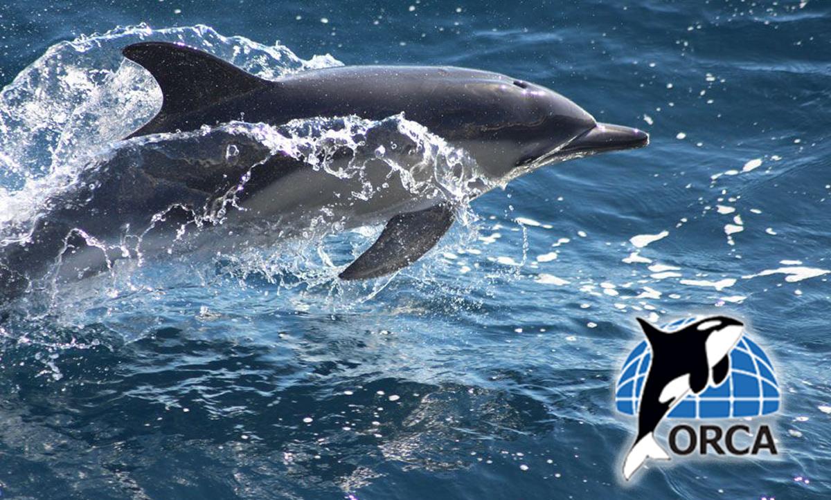 ORCA - UK BAsed cetacean charity