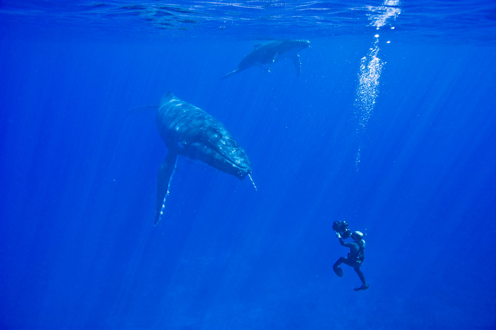 Doug diving with humpbacks in Tonga