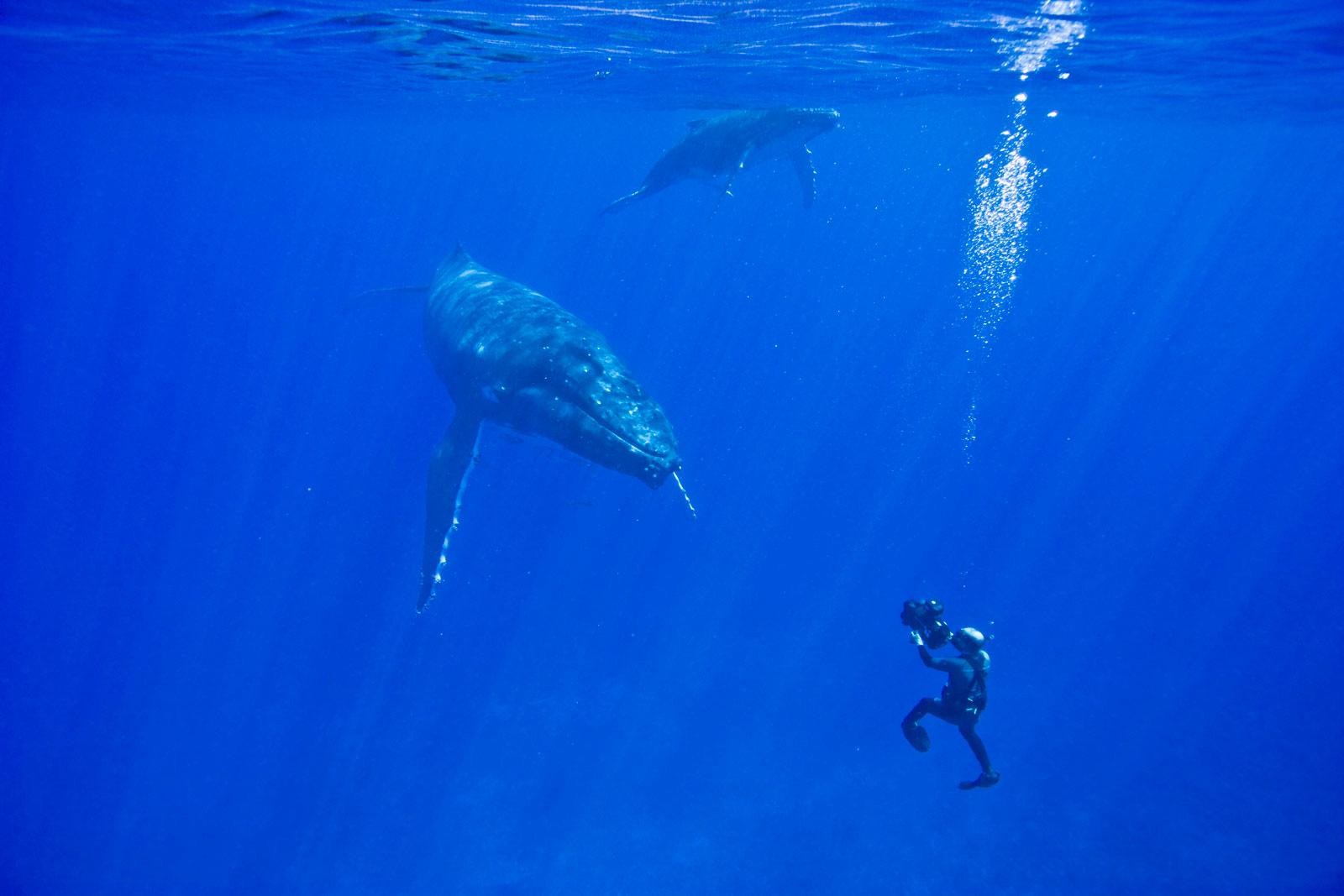 Doug diving with humpbacks in Tonga