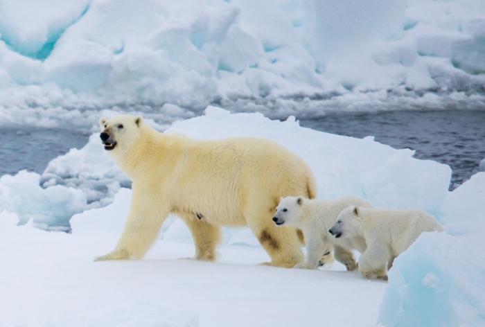 xploring Spitsbergen